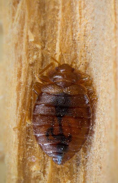 Bed bug control exterminators