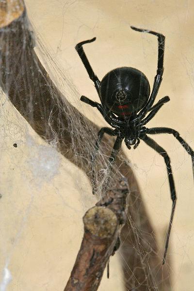 spider control, spider treatment, portland area