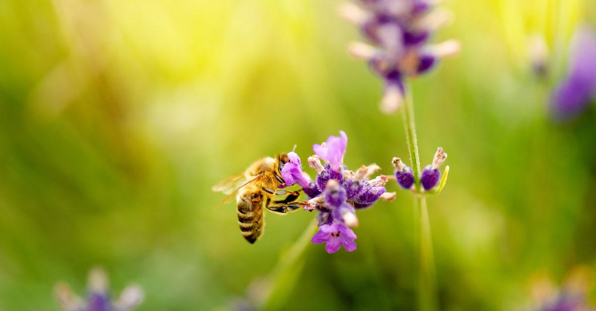 Honeybees Portland OR