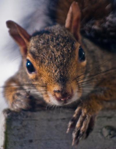 Portland Oregon squirrel control