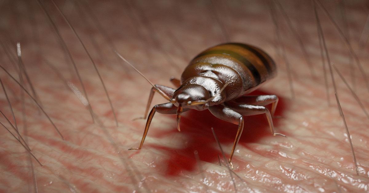 Bed Bug Bites Vancouver WA