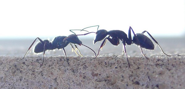 Natural Home Remedies For Getting Rid Of Ants