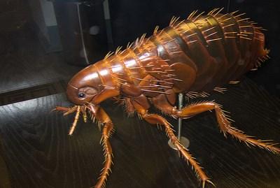 flea control vancouver wa