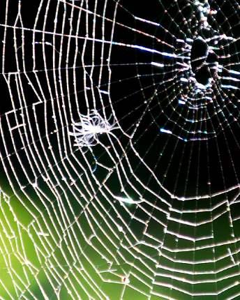 Spider Control Vancouver wa