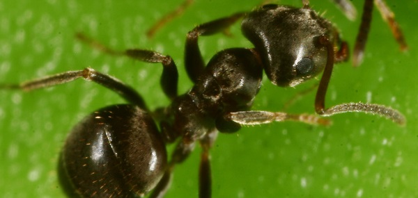 How To Avoid An Ant Infestation This Spring