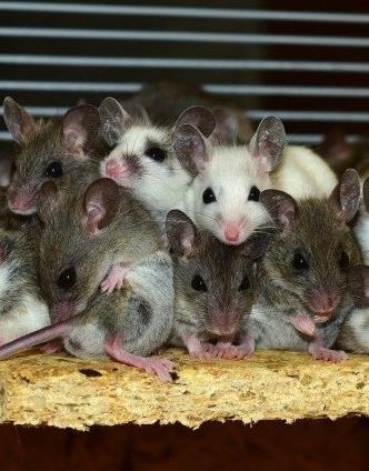 Mice Control Vancouver Wa