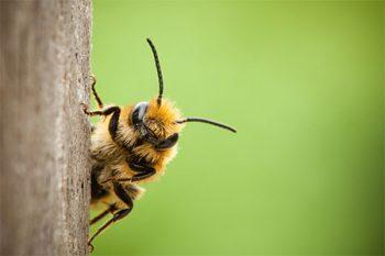 Beehive Removal Portland